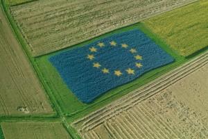 EU predviđa stabilnu sezonu i porast proizvodnje
