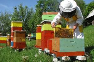 Bespovratno 20 miliona za pčelarstvo u Vojvodini