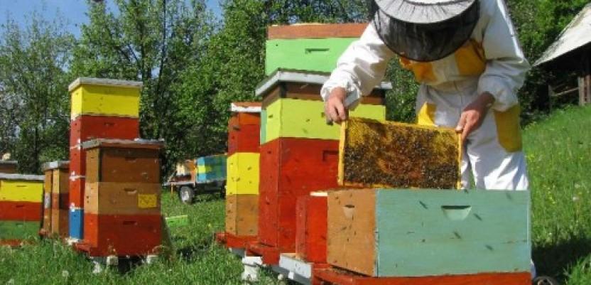 Sve više pčelara u Srbiji