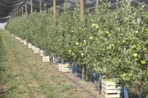 Vojvodina: Više od 100 miliona dinara za voćnjake
