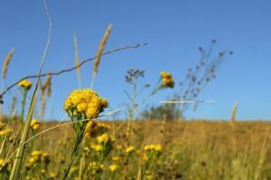 Cvećem umesto pesticidima do veće proizvodnje