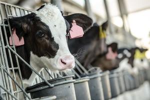 Novi pravilnik o podsticajima za tov stoke
