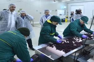 Čadež: Što pre doneti pravilnik za jagodičasto voće