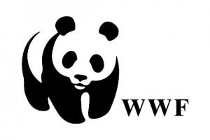 WWF: Dve trećine populacije divljih vrsta nestalo za manje od 50 godina