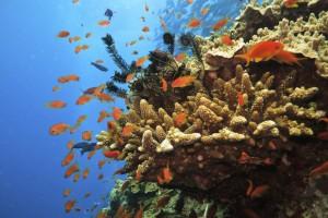 Naučni skup o očuvanju koralnih grebena