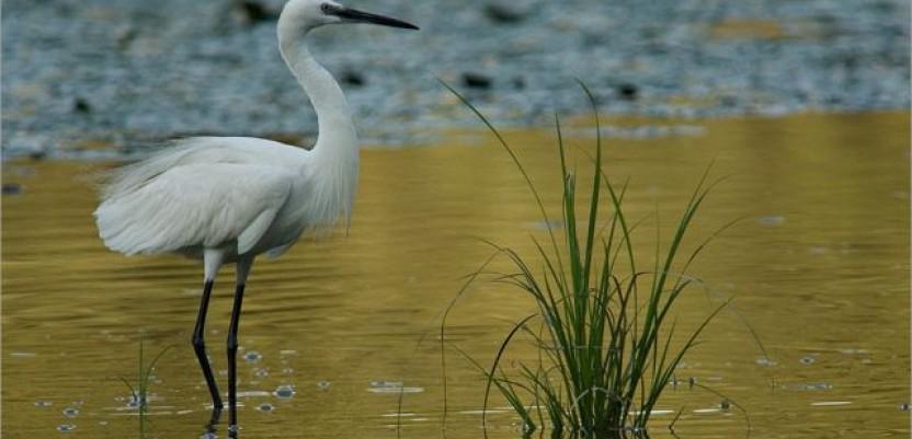 Počela izrada Crvene liste ptica u Srbiji