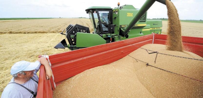 Direkcija za robne rezerve kupuje pšenicu