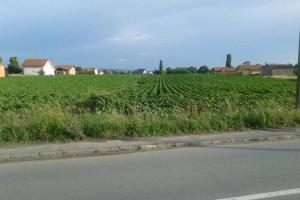 Beograd: Poziv za dokazivanje prava prečeg zakupa poljoprivrednog zemljišta