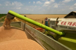 Ove godine država neće uzimati pšenicu