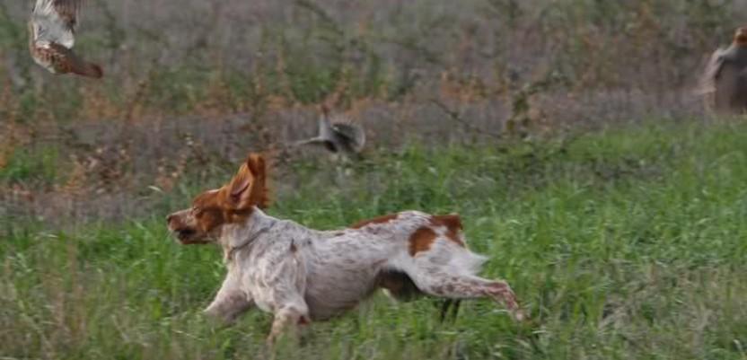 Krivolovci napali članove Društva za zaštitu ptica