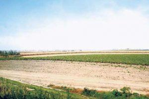 Pančevo: Uzurpirano 3.000 hektara državnog zemljišta