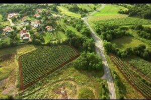 Slovenija: Pad proizvodnje zbog subvencija po hektaru