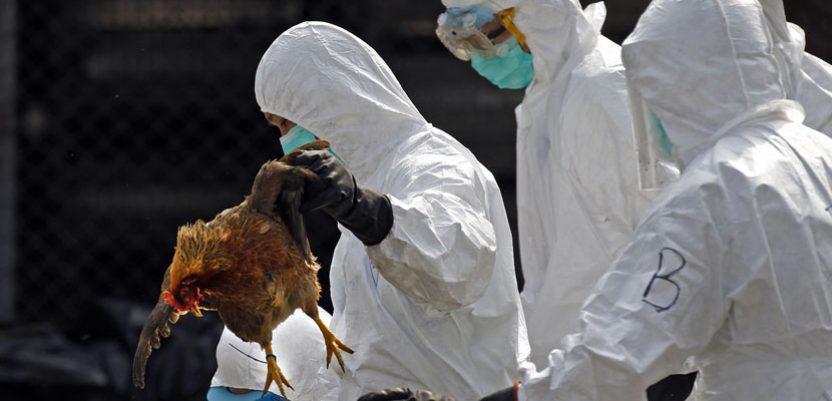 U Rusiji zabeležen prenos ptičjeg gripa na ljude