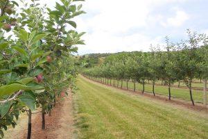 Navodnjavanje 350 hektara voćnjaka u Topoli