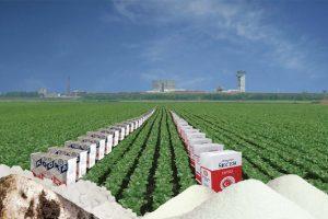 Počeli potresi na tržištu šećera