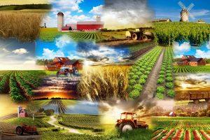 KG: Poljoprivrednicima promenjen iznos subvencija