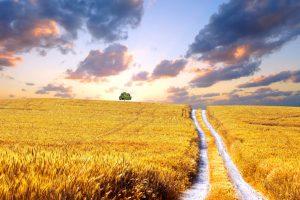 Ukrajina ukida moratorijum na prodaju poljoprivrednog zemljišta