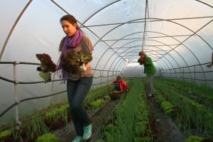FAO: Veće zapošljavanje žena u organskoj poljoprivredi
