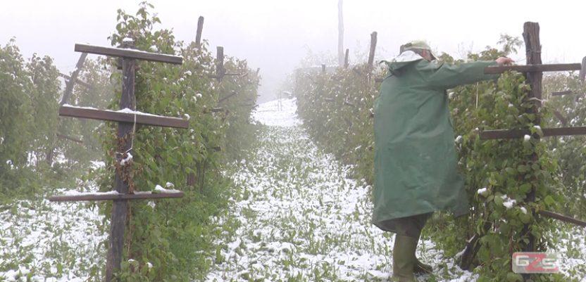 Mraz u Arilju, procena štete na malini narednih dana