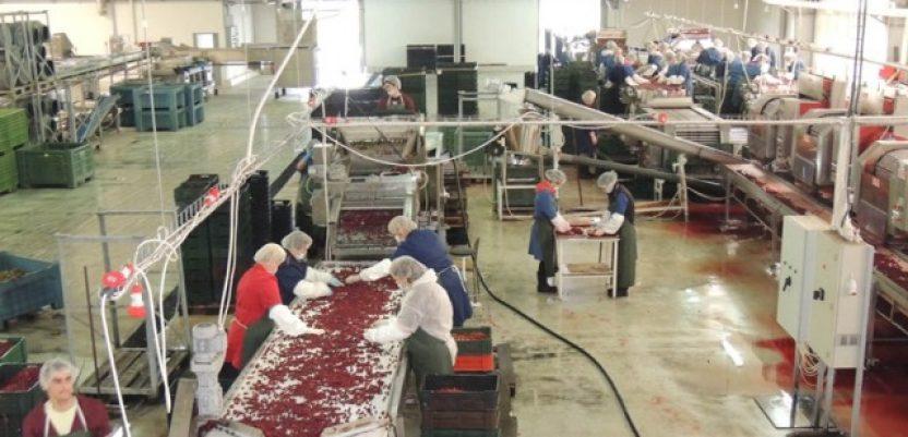 Do pet miliona prerađivačima mleka, mesa, voća i povrća