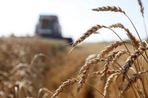 Ratari ne žure sa prodajom pšenice