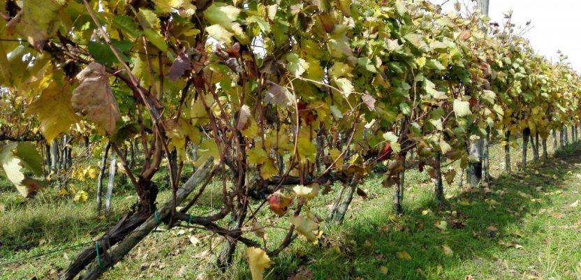 Poseban projekat Vlade za unapređenje vinarstva