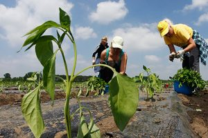 Poziv ženama za obuku i razvijanje posla u agrobiznisu