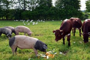 Nemac razvija organsko stočarstvo u Jazaku