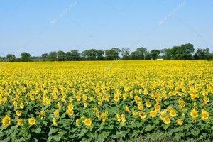 Poboljšati poljoprivrednu saradnju Srbije i Mađarske
