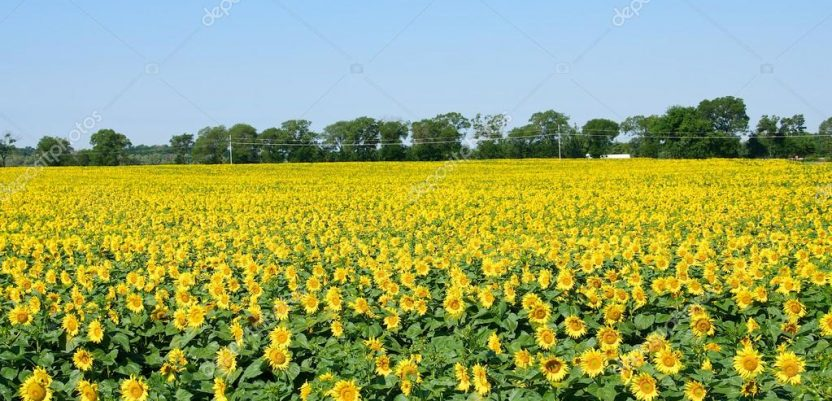 Počinje anketiranje 120.000 poljoprivrednih gazdinstava