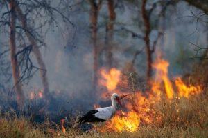Molba: Ne palite vatru na njivama
