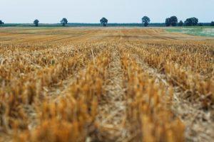 Nema rasprave o Zakonu o poljoprivrednom zemljištu