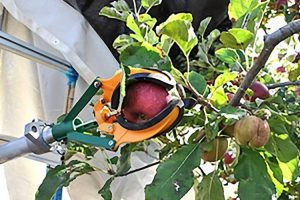 U Kaliforniji će uskoro roboti brati jabuke