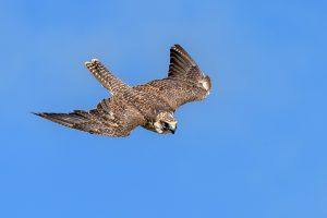 Veštačka gnezda na dalekovodima u cilju zaštite ptica