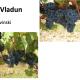 Priznate nove sorte vinove loze