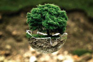 Udruženjima do 900.000 za zaštitu životne sredine