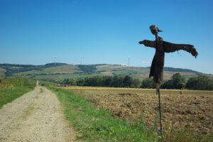 Duži rok za zakup državnog poljoprivrednog zemljišta