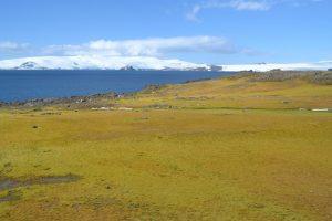 Nakon Arktika, i Antarktik postaje sve zeleniji