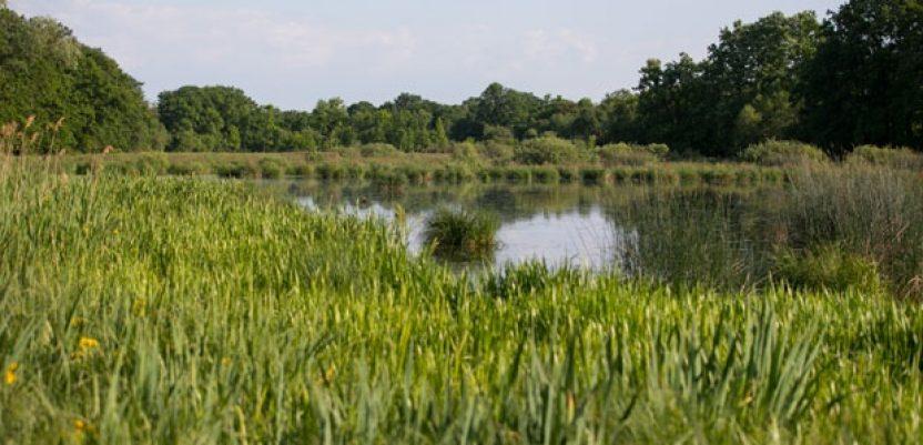Bačko Podunavlje na Svetskoj listi rezervata