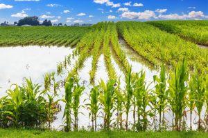 Počelo podnošenje zahteva za osiguranje useva i plodova