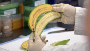 banana_provitamin_a