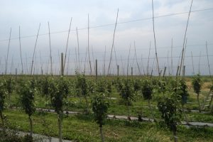 Ministarstvo pravi mapu voćnih rejona