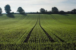 Za hektar zemlje u proseku 6.000 evra
