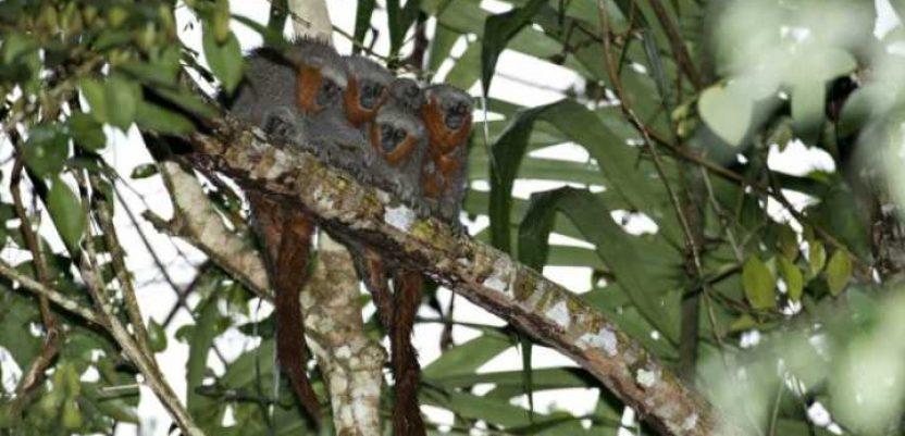 U Amazonu za dve godine otkrivena 381 nova vrsta