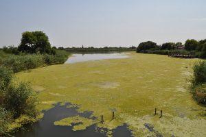 Reka Krivaja pretvorena u kanal otpadnih voda
