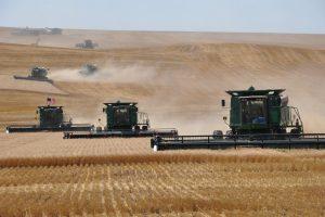 FAO prognozira rekordnu proizvodnju žitarica