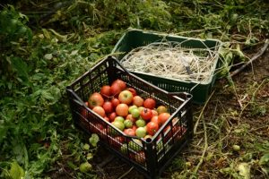 Šta koči razvoj organske proizvodnje