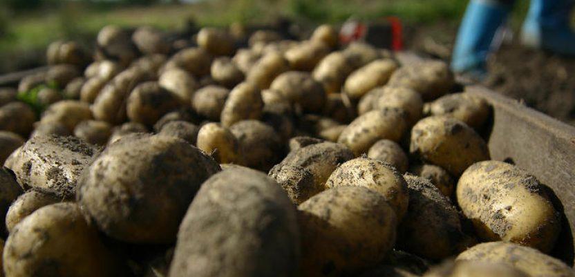 Luk i krompir dostigli dostigli cenu od 100 din/kg