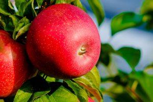 Jabukama vrednost porasla za petinu