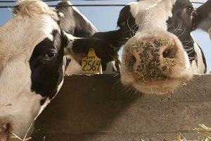 Softver za bolju kontrolu zaraznih bolesti životinja